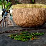 Pfeffer in Kampot