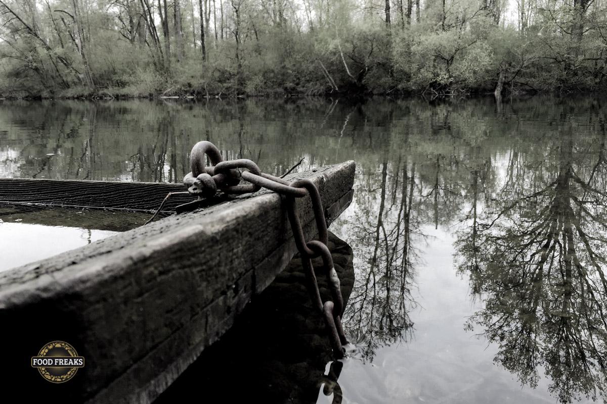 Morchelsuche in den Rheinauen