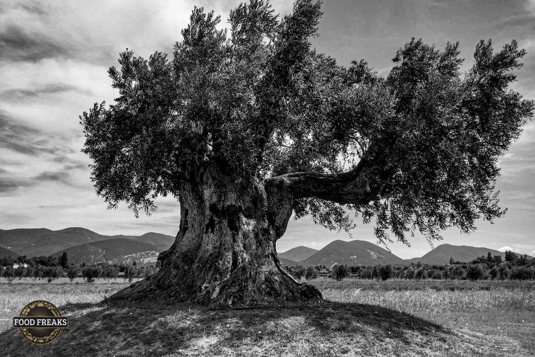 [Know-how] Mitera Olivenöl oder wie ich lernte, was Olivenöl ist